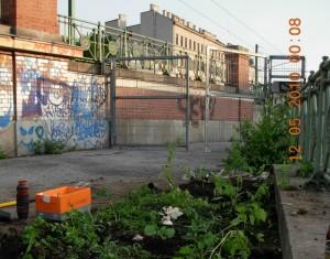 Guerilla Gardening in Wien II