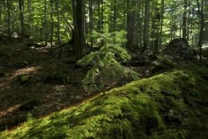 Österreich sucht die 7 Waldwunder