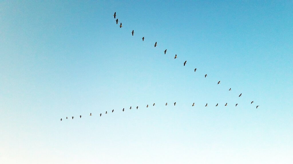 Vogelformation